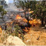 کاهش ۸۲ درصدی آتشسوزی جنگلهای خراسان رضوی