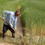 نیاز به عزم ملی برای حل مشکلات کشاورزی
