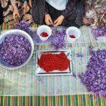 صندوق زعفرانی برای استان