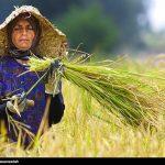 زنان روستایی، زنان سبز